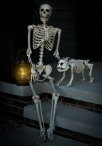 Life-Size Poseable Human Skeleton