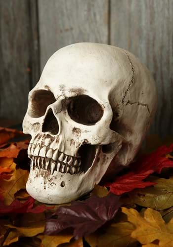 Deluxe Lifelike Skull Decoration