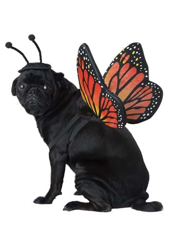 Fairy Butterfly Pet Costume