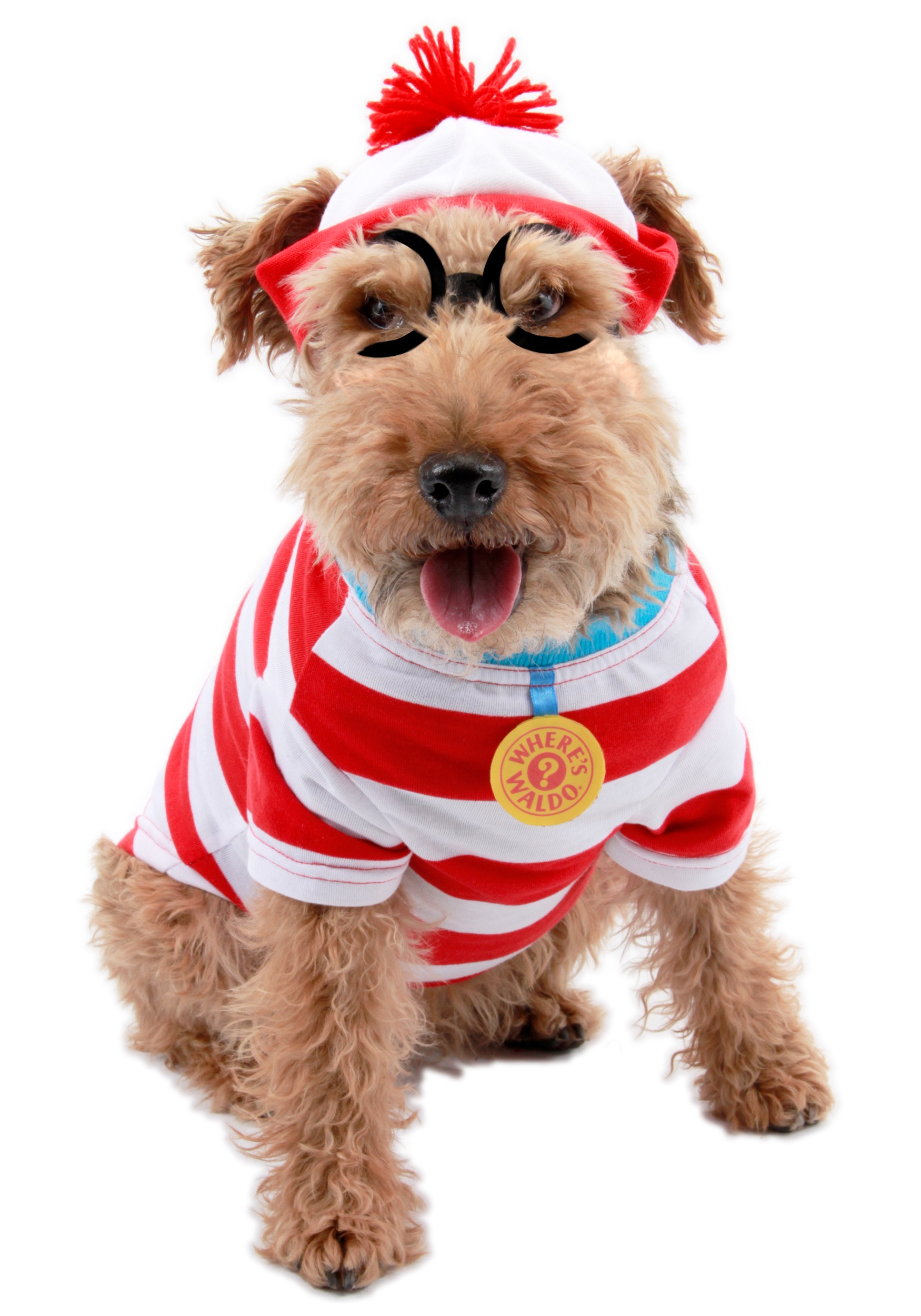 where's wally dog costume - halloween costumes for dogs, where's